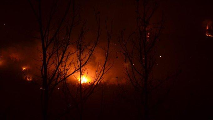 'Aydın'daki orman yangını kontrol altına alındı'