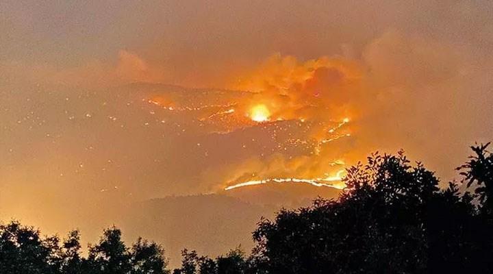 Bingöl'de yangın: 'Keklik, tavşan, domuz aklınıza ne kadar hayvan geliyorsa yandı'