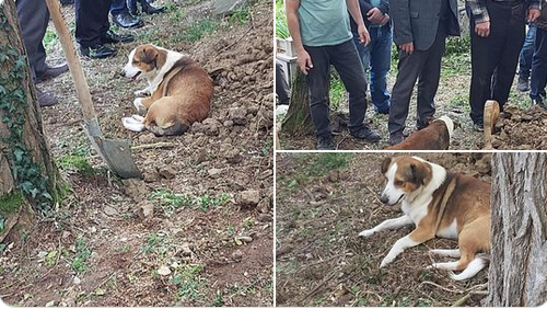 yoldaş,köpek,Boşluğa düşüp hayatını kaybetti, Yoldaş isimli köpek mezarı başından ayrılmadı