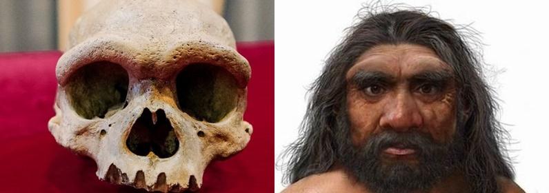 Ejderha adam: Yeni bir insan türüne ait olduğu düşünülen, 146 bin yıllık kafatası
