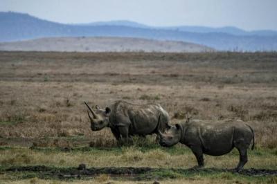 '10 yıl içinde korunan alanların dışında yaban hayatı kalmayabilir'