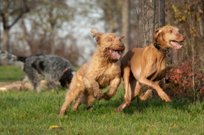 65 tür hayvanın güldüğü ortaya çıktı
