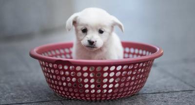 ABD, 100'den fazla ülkeden köpek ithalatını yasakladı