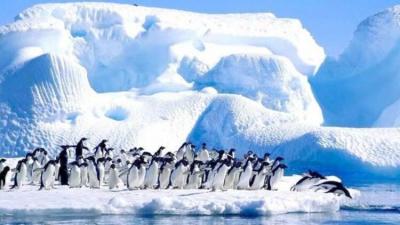 Antarktika'da yeni bir yaşam formu keşfedildi