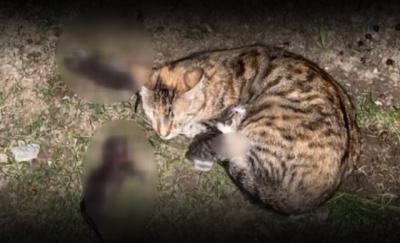 Bahçeşehir'de anne kedi ve yavrularına kürekle vurdu, yavrular hayatını kaybetti