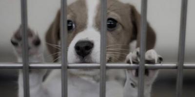 Hayvanları Koruma Kanunu, Meclis'te kabul edildi