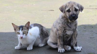 Çanakkale'de 30'a yakın kedi ve köpek katledildi!