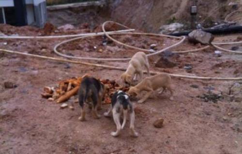 Ataşehir'de  köpek katliamı!