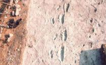 Dünyanın en eski insan ayak izlerine inceleme!