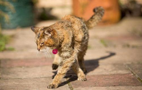 Dünyanın en yaşlı kedisi 114 yaşına girdi!