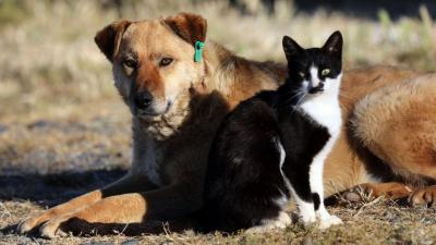 Hayvanları Koruma Yasa teklifindeki 'cinsel ilişki' ifadesine tepki: 'Hayvanın rızası mı var?'