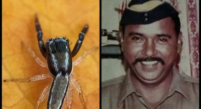 Hindistan'da yeni bulunan örümcek türüne polisin adı verildi