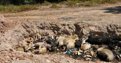 İHA, İBB barınağının yanında toplu hayvan mezarı bulunduğunu iddia etti