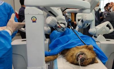 İran'da robotla ilk uzaktan ameliyat: Köpek kısırlaştırıldı