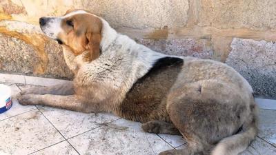 İzmir'de çocuğunu ısırdığını iddia ettiği köpeği vurdu