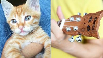 Kaybolan kedisinin anısına kedi başlı ukulele üretti