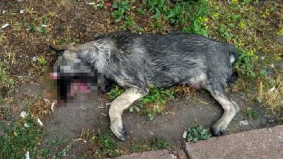 Kayseri'de gözleri oyulmuş ölü köpek bulundu!