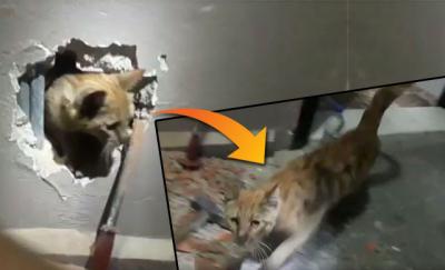 Kütahya'da mahsur kalan kedi, duvar kırılarak kurtarıldı