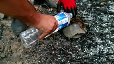 Manavgat'ta orman yangınında mahsur kalan kaplumbağa kurtarıldı