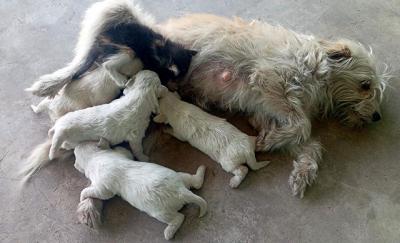 Manisa'da annesinin terk ettiği yavru kediyi köpek emziriyor