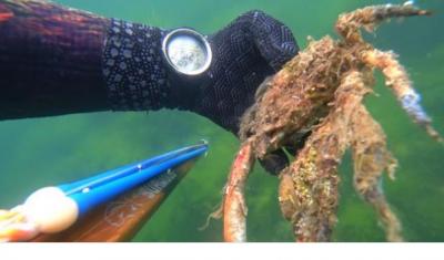 Müsilajın deniz canlılarında yarattığı tahribat görüntülendi