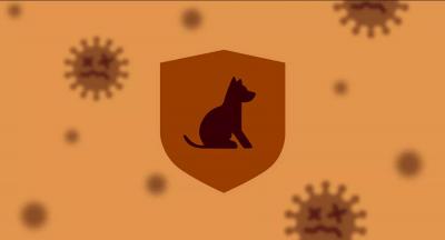 Rusya, hayvanlar için koronavirüs aşısı geliştirdi: Carnivac-Cov