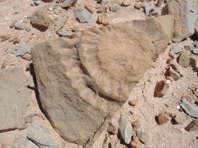 Şili'de 160 milyon yıllık 'uçan ejderha' fosili bulundu