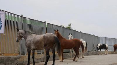 'Teslim edilen atların sorumluluğu İBB'den düştü'
