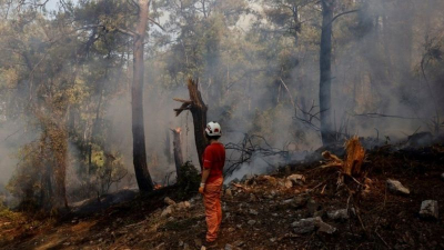 Türkiye'nin ormanlarına ne oluyor, yangın riski nasıl arttı?